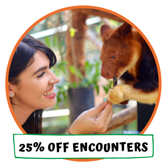 25% Off Encounters