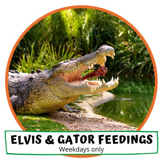 Elvis & Gator Feedings